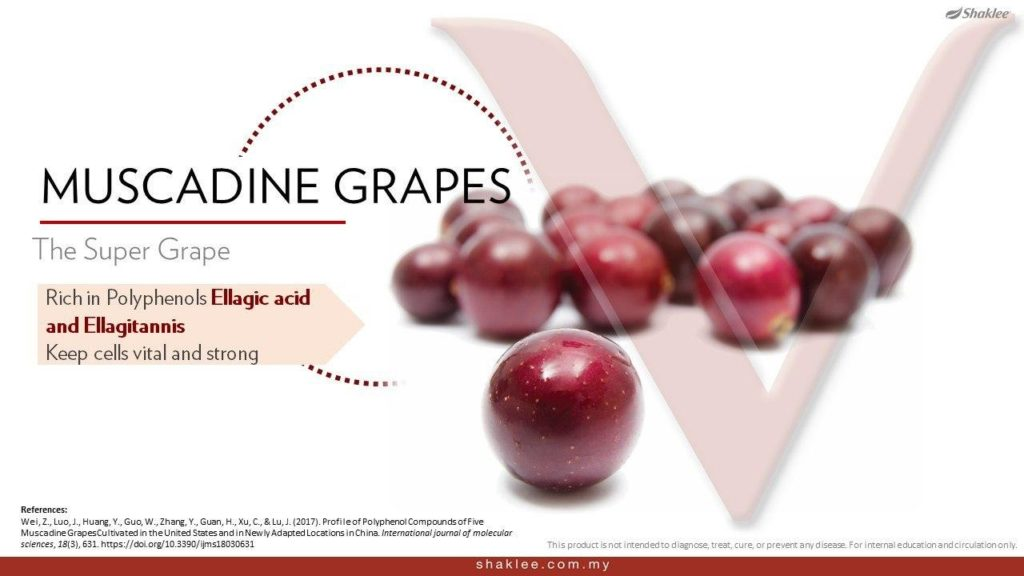 muscadine grapes resv